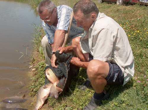 Repopulare Lac Mariselu: Iunie 2007